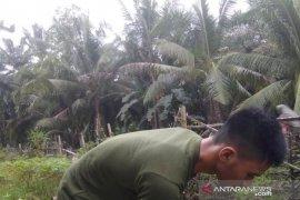 Mahasiswa Polbangtan Medan aktif bertani semasa pandemi COVID-19