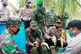 Polres Nagan Raya budidaya ikan tawar untuk ketahanan pangan
