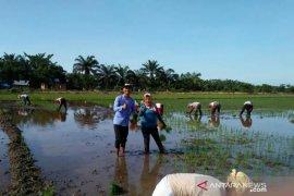Polbangtan Medan dampingi petani dukung program Menteri Pertanian
