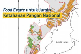 Govt plans to establish new food estate in Central Kalimantan