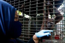 Perawatan Satwa sitaan BKSDA Aceh
