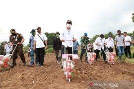 Pemkab Garut dorong peningkatan produksi jagung lokal