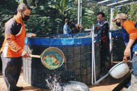 Mitra binaan Pertamina  budidaya ikan Nila dengan Bioflok