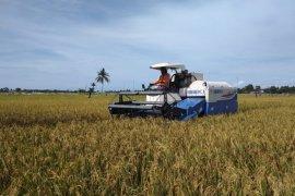 Petani Abdya panen padi jaga stabilitas pangan ditengah pandemi COVID-19