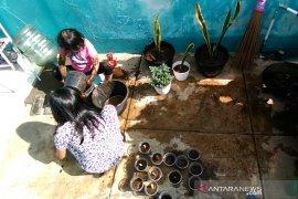 Pemkab Garut siapkan bibit sayuran untuk pelajar terdampak wabah COVID-19