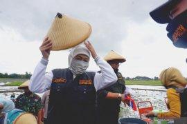 Masa tanam padi di lima kabupaten Jatim dipercepat