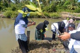 Aksi tanam manggrove cegah abrasi di Aceh Besar