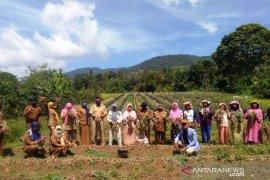 Petani Sipirok panen bawang merah bantuan Kementan
