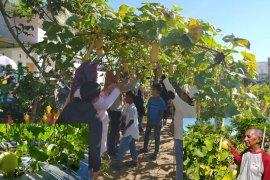 Agrowisata melon di Kota Bengkulu ramai pengunjung