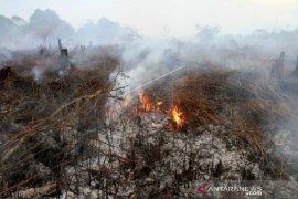 Api hanguskan 2,1 hektare lahan gambut di Aceh Barat