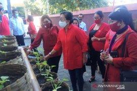 Putri Suastini dukung kader PDIP manfaatkan pekarangan rumah ditanami sayuran