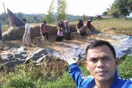 Santri Ponpes Nurul Yatama Lebak panen padi seluas 1,5 hektare