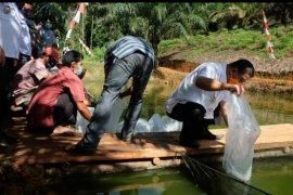 Bupati Sekadau lepas sebanyak 6.000 bibit ikan di kolam Gapoktan