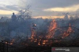 Kebakaran lahan gambut meluas di Aceh Barat