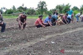 Petani lokal di Teluk Wondama mulai kembangkan padi gogo