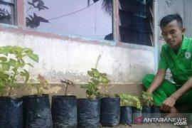 """Selama """"stay at home"""", Mahasiswa Polbangtan Medan asal Riau budidaya Bunga Piladang di pekarangan"""