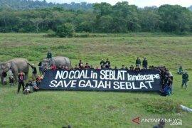 UU Minerba ancam habitat gajah Sumatera di Bengkulu