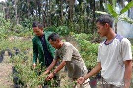 Mahasiswa Polbangtan Medan dampingi perawatan budidaya tanaman cabai