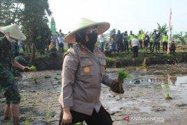 Polres Sukabumi Kota gagas aksi budidaya padi dan ikan