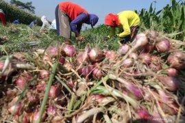 Pasokan rendah, harga bawang merah bertahan mahal di Medan