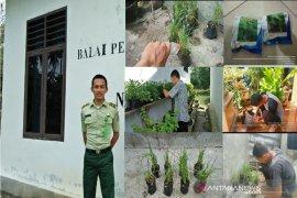 COVID-19, Mahasiswa Polbagtan manfaatkan pekarangan dengan bercocok tanam