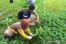 Mahasiswa Polbangtan Medan dampingi warga Langkat panen kangkung ditengah COVID-19