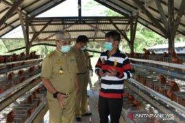 Jaga ketahanan pangan Babel, Gubernur Erzaldi kunjungi usaha peternakan ayam