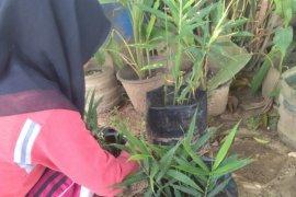 Mahasiswa Polbangtan Medan ajak masyarakat hiasi pekarangan dengan berbagai tanaman