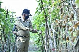 Bupati Bangka, Mulkan ajak masyarakat memanfaatkan pekarangan rumah
