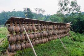 Petani padi huma di Lebak Banten panen raya