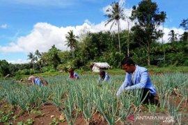 Mahasiswa Polbangtan Medan dampingi petani Padang Sidempuan tanam bawang