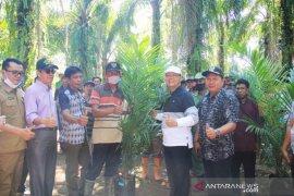Seluas 77 hektare kebun sawit rakyat di Bengkulu diremajakan