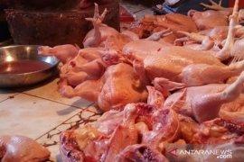 Pasokan kurang, harga ayam di Pontianak capai Rp37.000 per kilogram