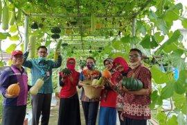 Kebun percontohan Distan Kalbar sarana edukasi bagi petani milenial