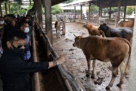 Menteri Pertanian kunjungi kandang penggemukan sapi