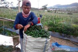 Anggota DPRD minta Pemda Rejang Lebong bantu petani sayuran