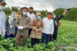 Direktur Polbangtan Medan ikut dampingi Mentan panen perdana  bawang putih di Humbahas