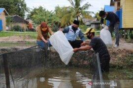 Tanah Bumbu Regent spreads thousands catfish to improve food welfare