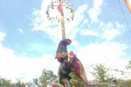 Naik pinang, tingkatan kecintaan anak-anak di Batu Benawa pada budaya lokal