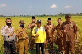 Penyuluh siap dampingi panen padi di Tanah Sepenggal Bungo
