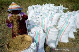 Foto - Pemkab Bone Bolango dorong ketahanan pangan meski pandemi