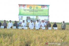 Bulog Kalbar jamin stok beras aman hingga enam bulan