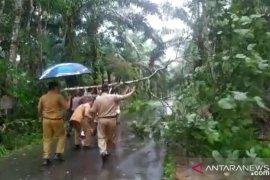 Bupati Bangka turun langsung angkat pohon tumbang (Video)