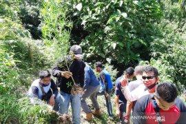 Tanam puluhan pohon ganja, warga Pariaman jadi buronan