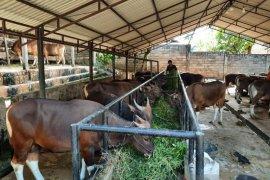 Kota Jambi sosialisasi pemotongan hewan kurban dengan  protokol kesehatan