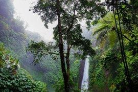 KLHK: Terjadi regenerasi alami tumbuhan dan hutan saat COVID-19