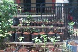 Urban farming di Kota Bogor, bantu kebutuhan pangan warga