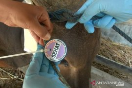 Pemerintah keluarkan panduan shalat Idul Adha, sembelih hewan kurban