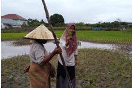 Penyuluh dan petani Sarolangun bersinergi jaga stabilitas ketahanan pangan