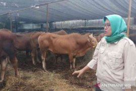 Pemkot Bekasi siagakan petugas sisir lapak pedagang hewan kurban